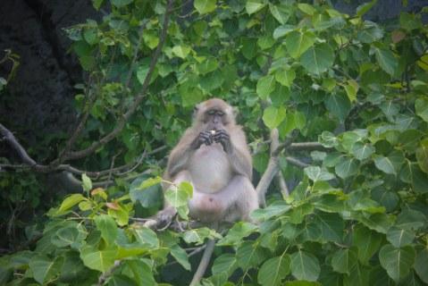 horney monkey
