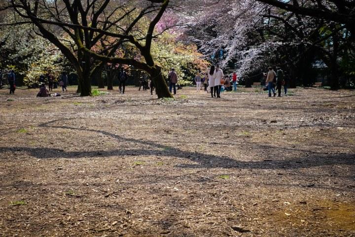 sakura shinjuku park
